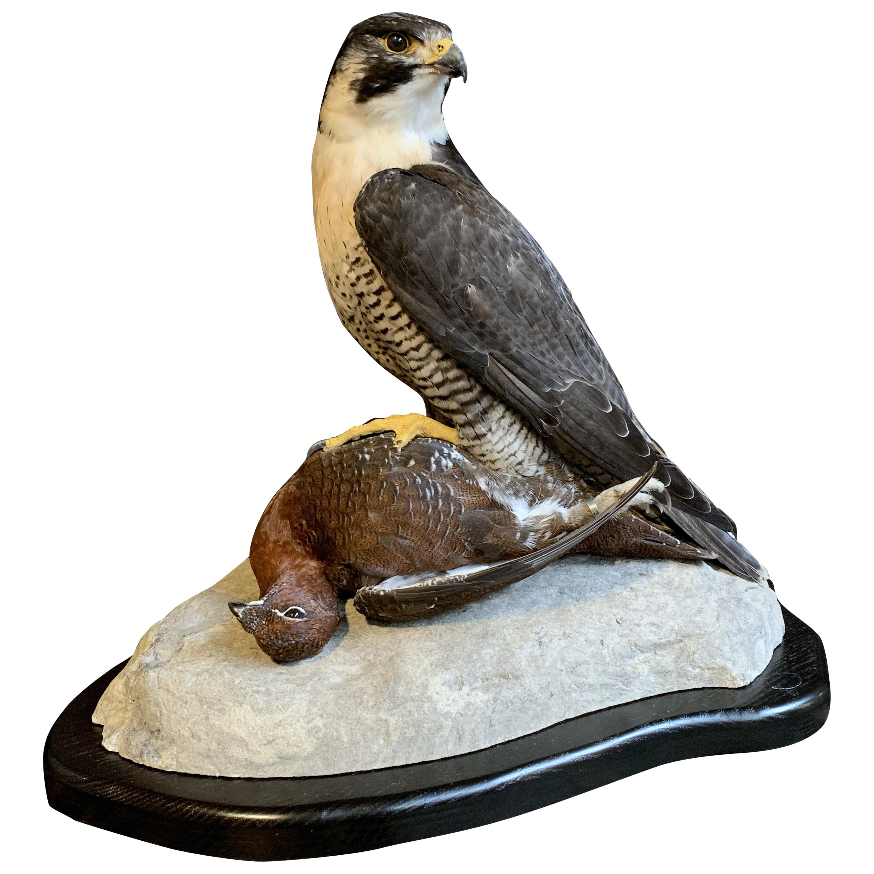Antique and Vintage Taxidermy - 455 For Sale at 1stdibs