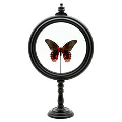 Red Butterfly in Round Reliquary