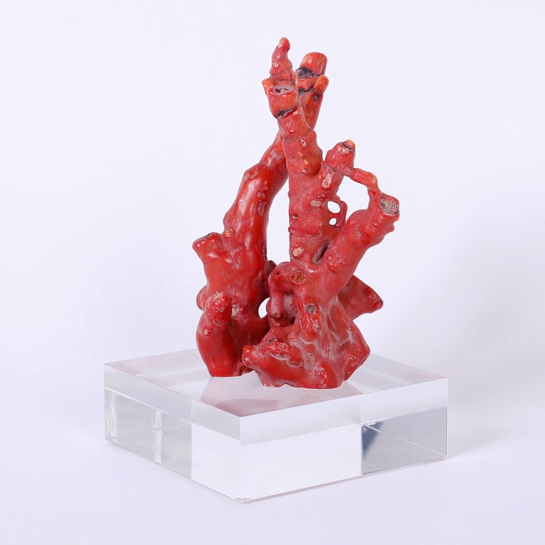 Authentic Chinese red bamboo coral fossil specimen with its enchanting colors and organic form. Presented on a Lucite Stand to enhance the sculptural elements.