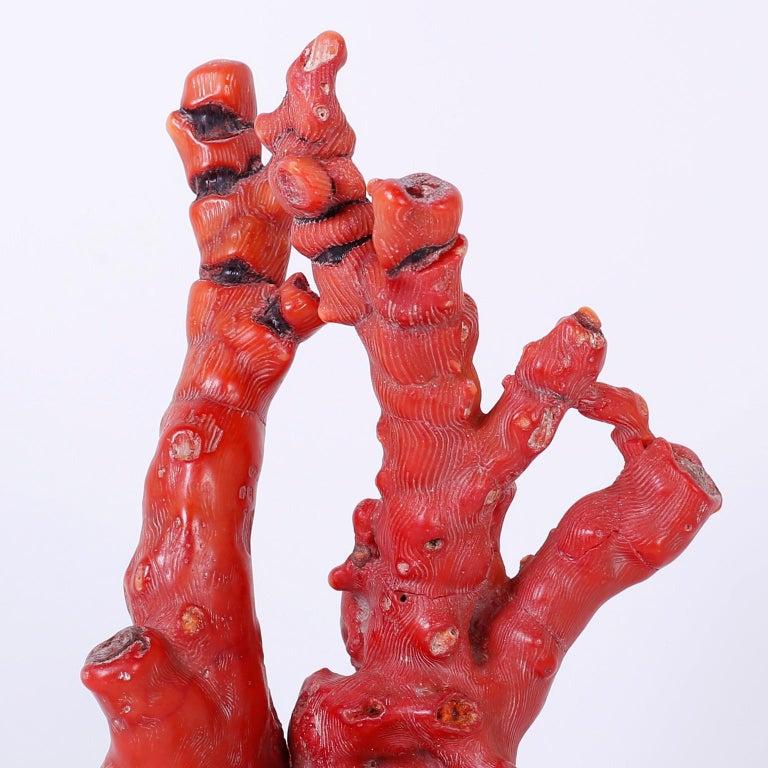 Solomon Islands Red Coral Sculpture For Sale