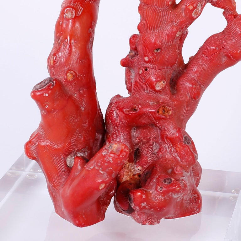 Red Coral Sculpture In Excellent Condition For Sale In Palm Beach, FL