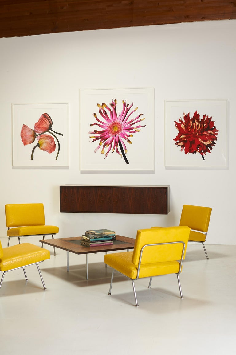 Contemporary Red Fire Dahlia by Michael Zeppetello For Sale