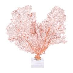 Red Sea Fan Specimen on Lucite