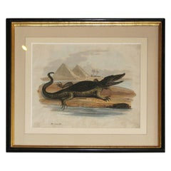 Regency Early 19th Century Copper Plate Engraving of a Crocodile