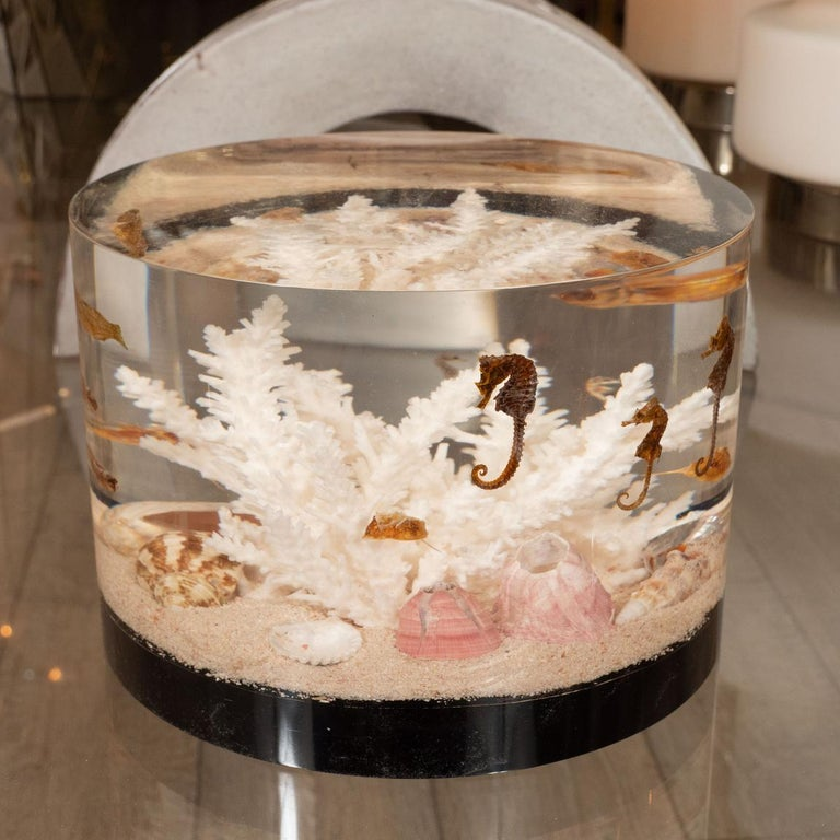 Decorative, resin encased seascape featuring natural, fossilized, sea life.