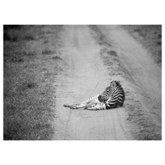 """""""Rest,"""" Black and White Photograph by Carolyn Schroeder"""