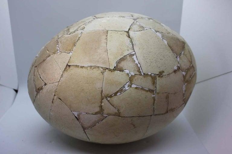 Restored Aepyornis Egg, Very Rare 3