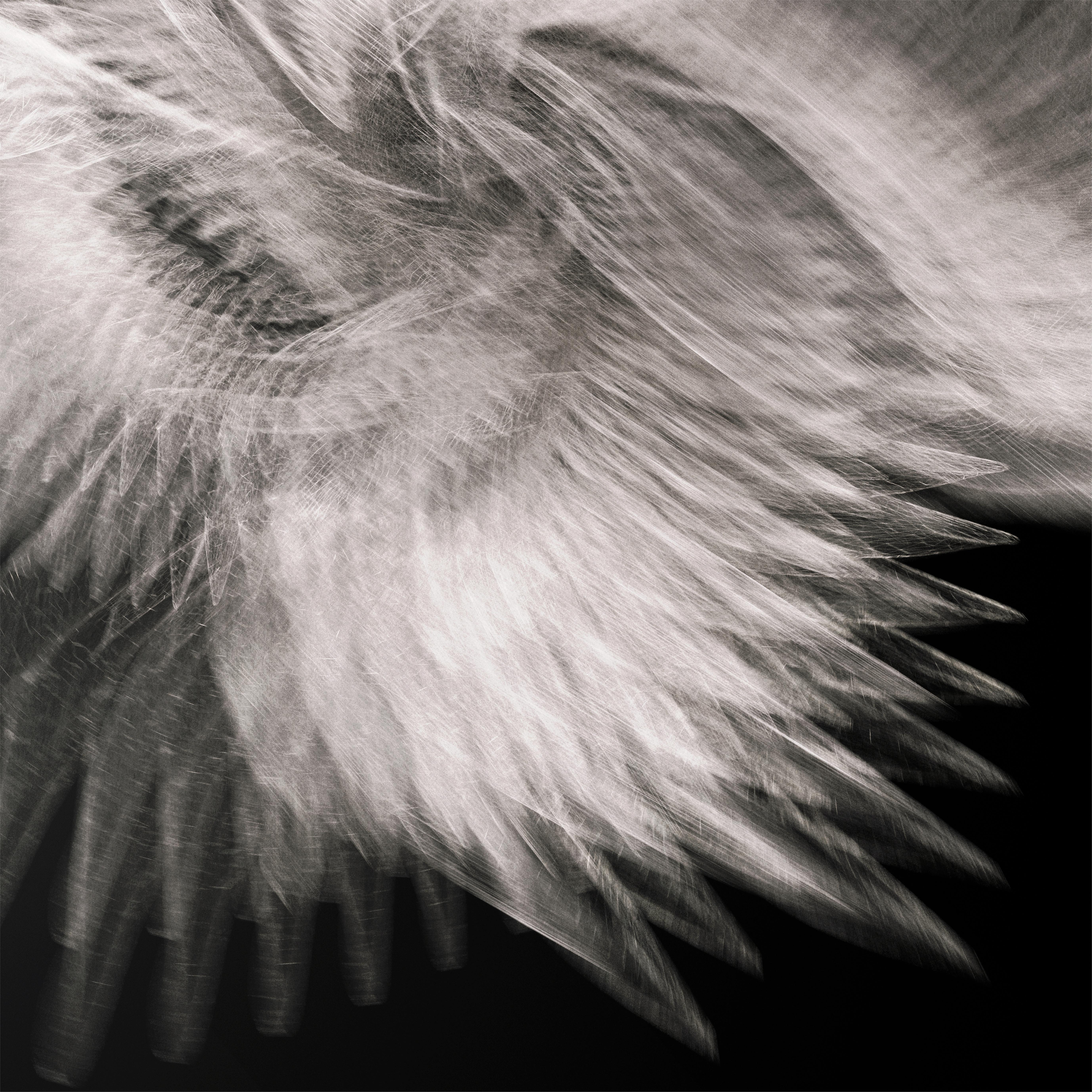 Icarus by Richard Devonshire, 3D rendering, Limited Edition