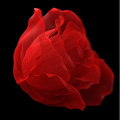Now Sleeps the Crimson Petal by Richard Devonshire, 3D rendering Limited Edition