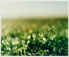 Dew, Cambridgeshire