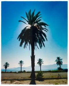 Palm Tree, Salton Sea, California - Blue sky palm print color photo