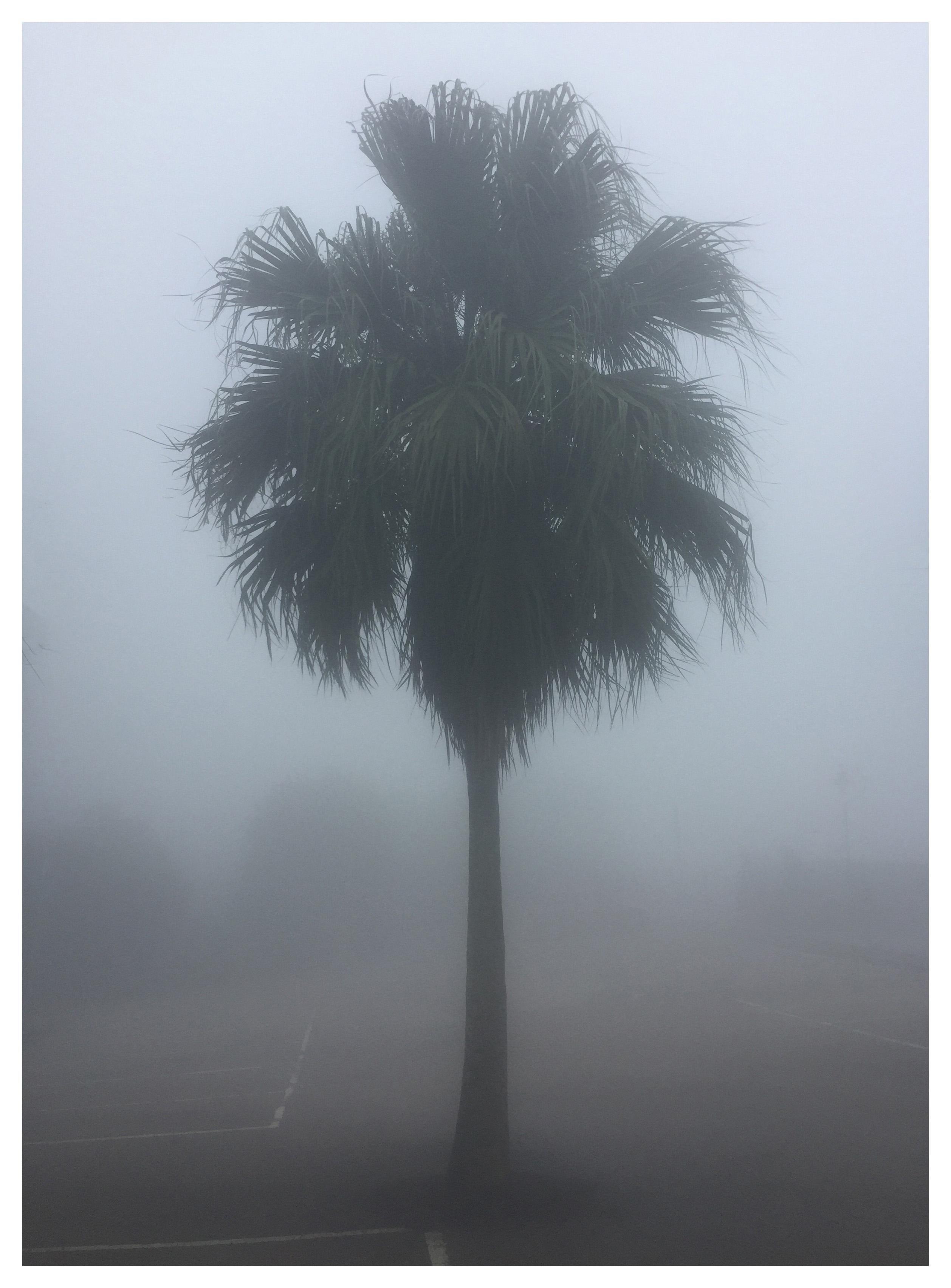 The Peak Palm Tree, Hong Kong - Palm print color photography