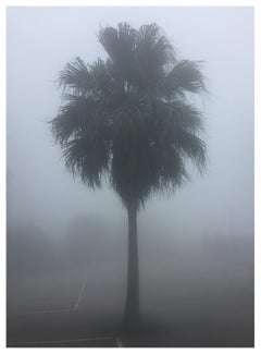The Peak Palm Tree, Hong Kong - Palm print color photography