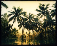 Vetyver Pool, Poovar, Kerala - Tropical Palm Print Indian Color Photography