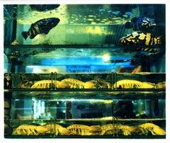 Wet Market, Kowloon, Hong Kong - Fish Tank Color Photography