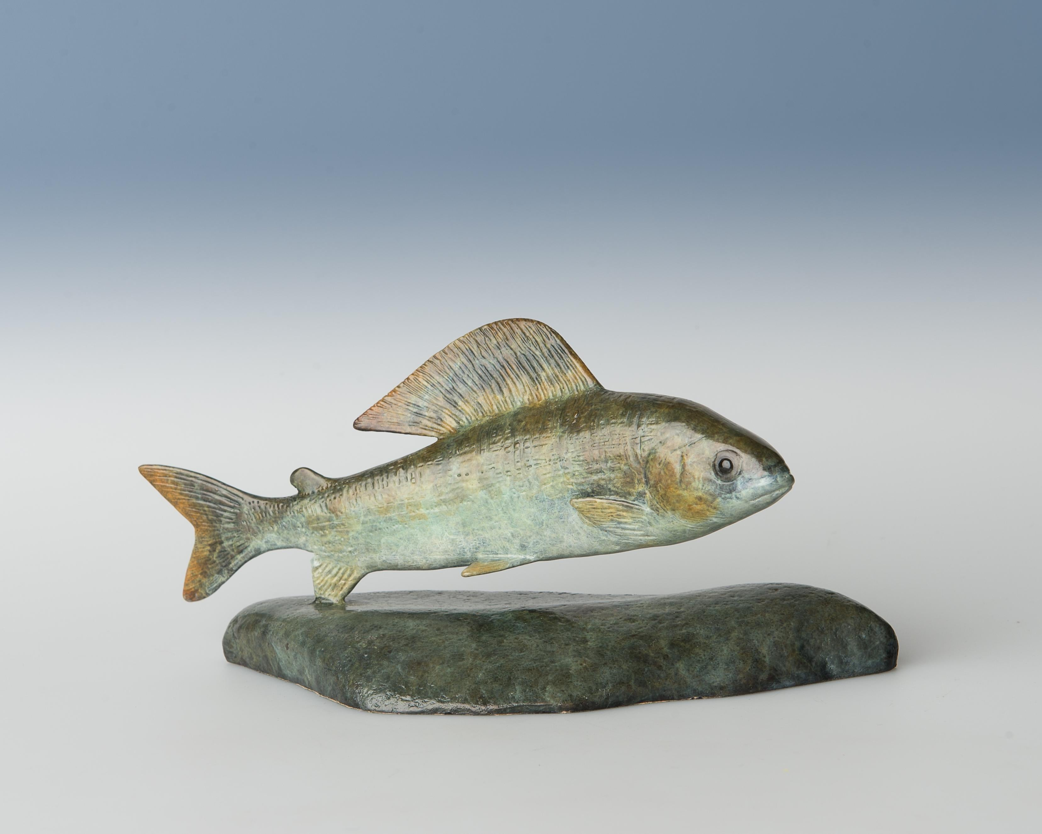 Contemporary Bronze Wildlife Fish Sculpture 'Grayling' by Richard Smith