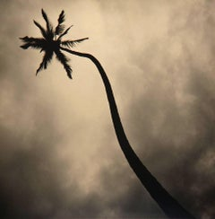 Palm, Hawaii