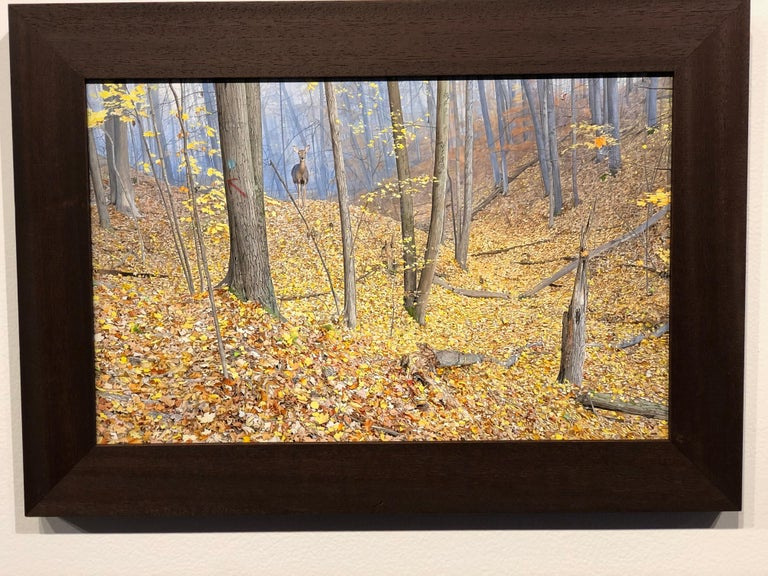 Though small in scale this painting delivers great impact.  Every detail is captured in meticulous brush work.    Rick Pas October Woods acrylic on panel 9h x 14w in 22.86h x 35.56w cm  ARTIST'S STATEMENT Creating is an addiction. With all the highs