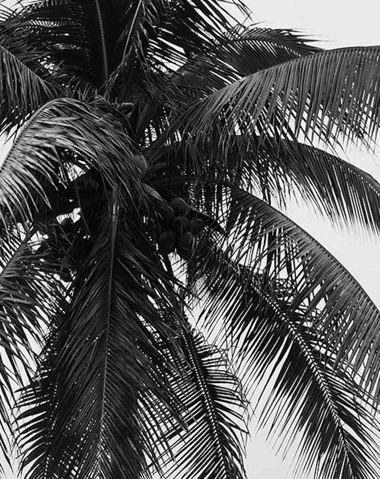 Men and Palm Tree. Black & White Archival pigment print,  Medium - Gray Black and White Photograph by Ricky Cohete