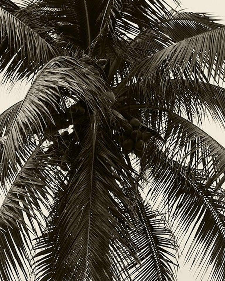 Men & Palm Tree. Sepia Archival pigment print, Medium - Beige Color Photograph by Ricky Cohete
