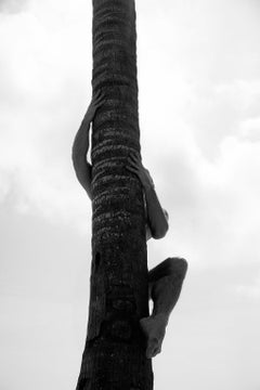 Palm Climb One. Black & White Archival pigment print,  Large