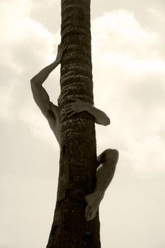 Palm Climb Two, Sepia Archival pigment print,  Large