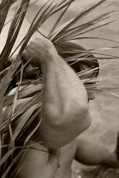 Palm Three. Sepia Archival pigment print, Medium