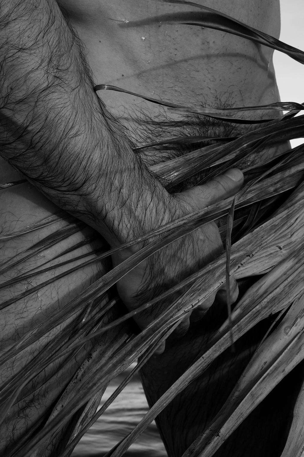 Palm Two. Black & White Archival pigment print,  Medium