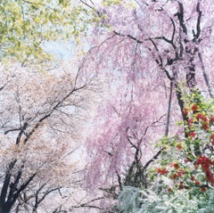 Untitled, from 'Illuminance' – Rinko Kawauchi, Cherry Blossom, Flowers, Spring