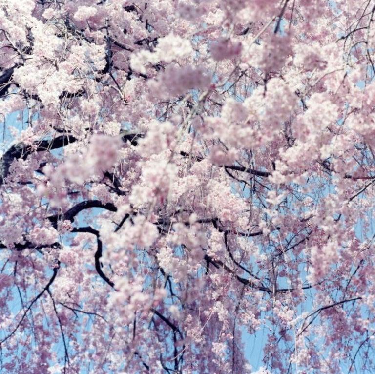 Untitled, from 'Illuminance' – Rinko Kawauchi, Cherry Blossom, Japan, Flowers - Contemporary Photograph by Rinko Kawauchi