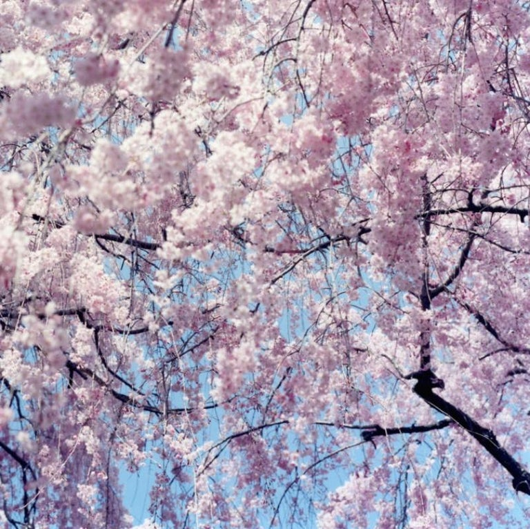 RINKO KAWAUCHI (*1972, Japan) Untitled, from the series 'Illuminance' 2011 C–type print Sheet 101.6 x 101.6  cm (40 x 40 in.) Edition of 6; Ed. no. 6/6 (last available edition) print only   Reminiscent of Japanese photography of the 1960s Rinko