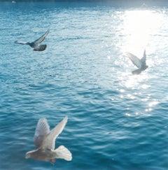 Untitled, from 'Illuminance' – Rinko Kawauchi, Water, Sun, Birds, Doves, Sea