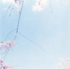"Untitled, from the series ""Approaching Whiteness"" – Rinko Kawauchi, Landscape"