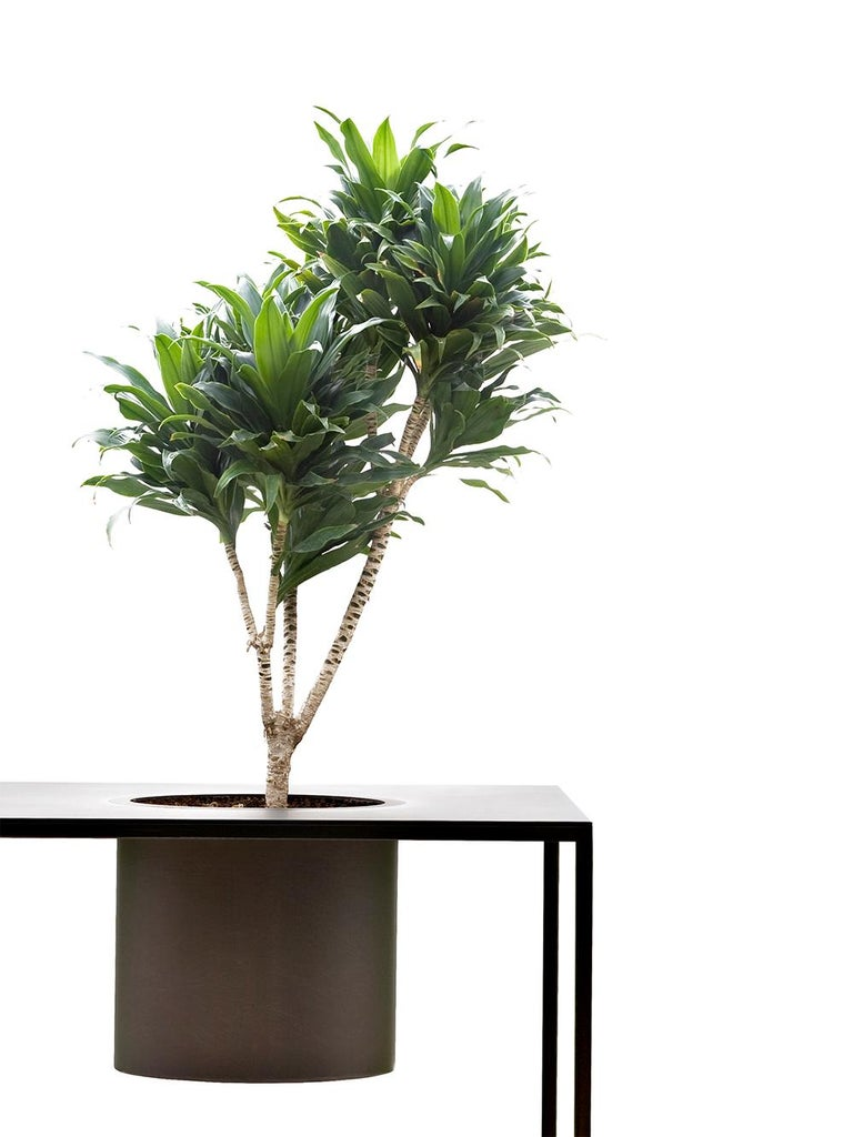 Riviera 1 plant h60cm is a vase in burnished iron designed by Aldo Cibic and made by DeCastelli, market leader in metalwork design for furniture made in Italy. After thinking about green on a large scale, Aldo Cibic approaches the aesthetic of