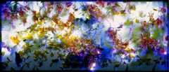 Field Mustard, photogram, color photography, plant life, chromogenic development