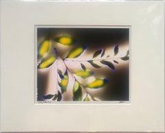 """""""Spring Willow"""" by Robert Buelteman, Cameraless photographic print, 2010"""