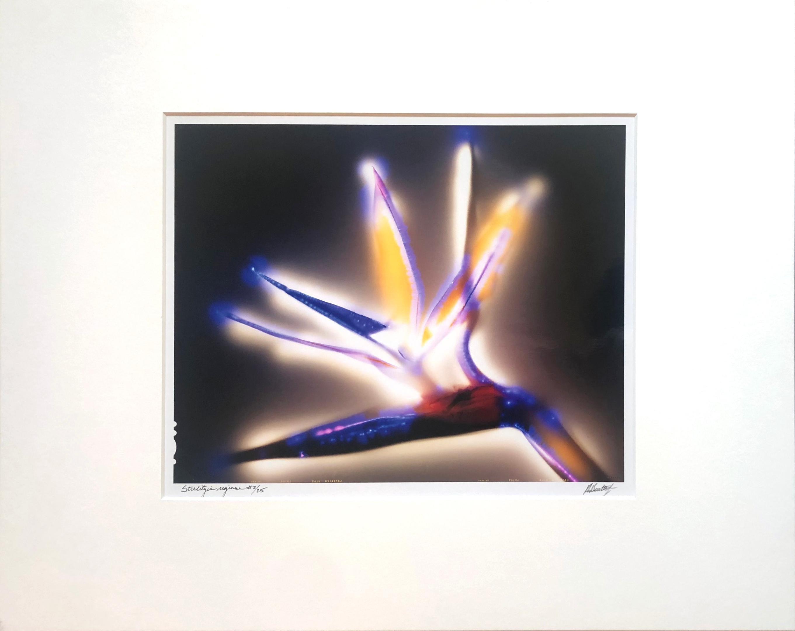 """Strelitzia reginae"" by Robert Buelteman, Cameraless photographic print, 2001"