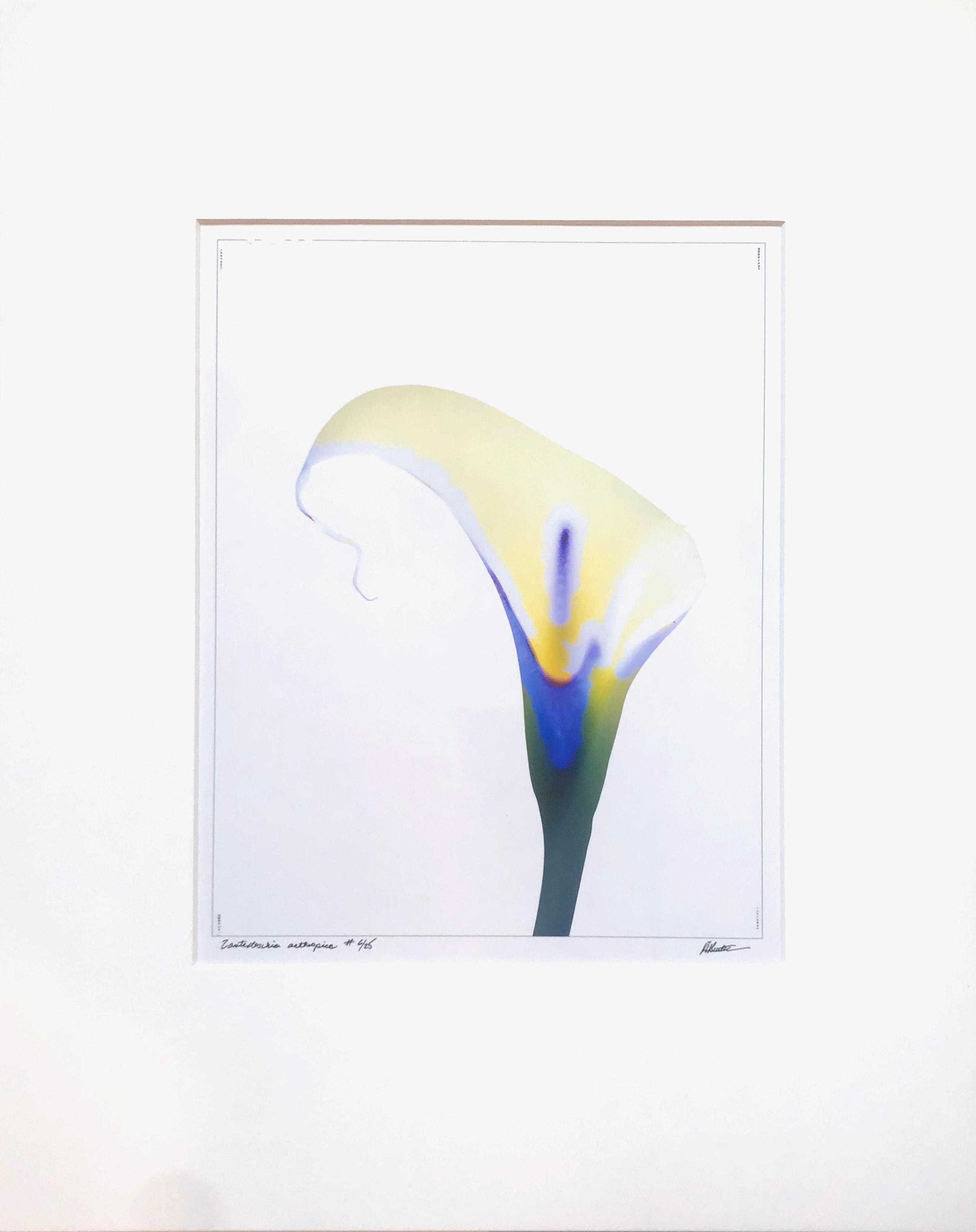 """Zantedeschia aethiopica"" by Robert Buelteman, Cameraless photograph print, 2000"