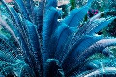 Blue Ferns and a Hint of Magenta. Sculpture Garden