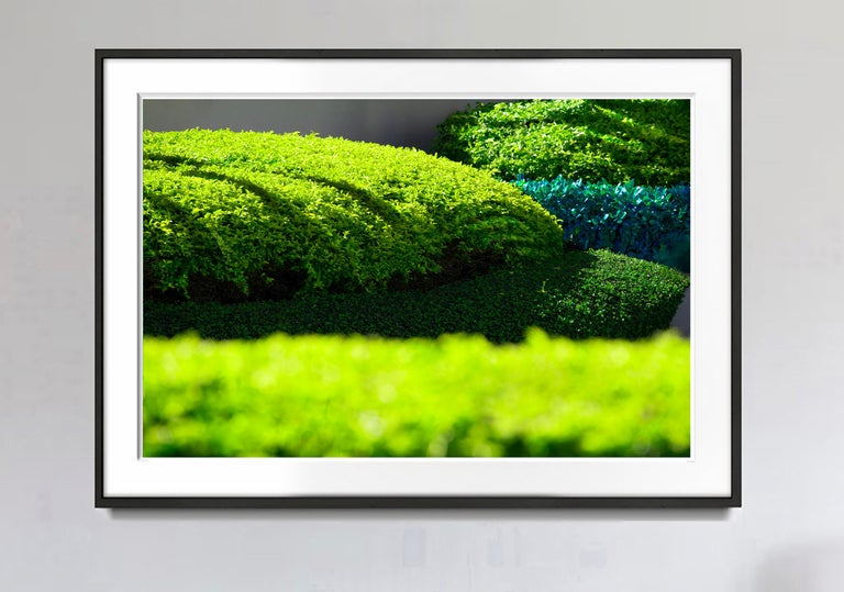 Hedge Fun - Brickell Key - Hedge Landscaping - Photograph by Robert Funk