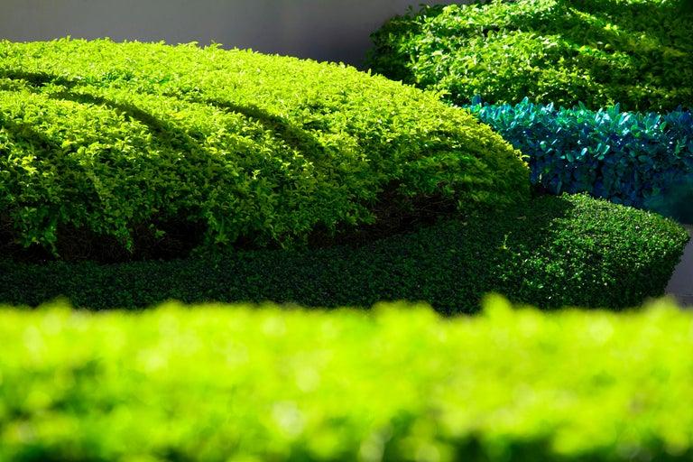 Robert Funk Landscape Photograph - Hedge Fun - Brickell Key - Hedge Landscaping