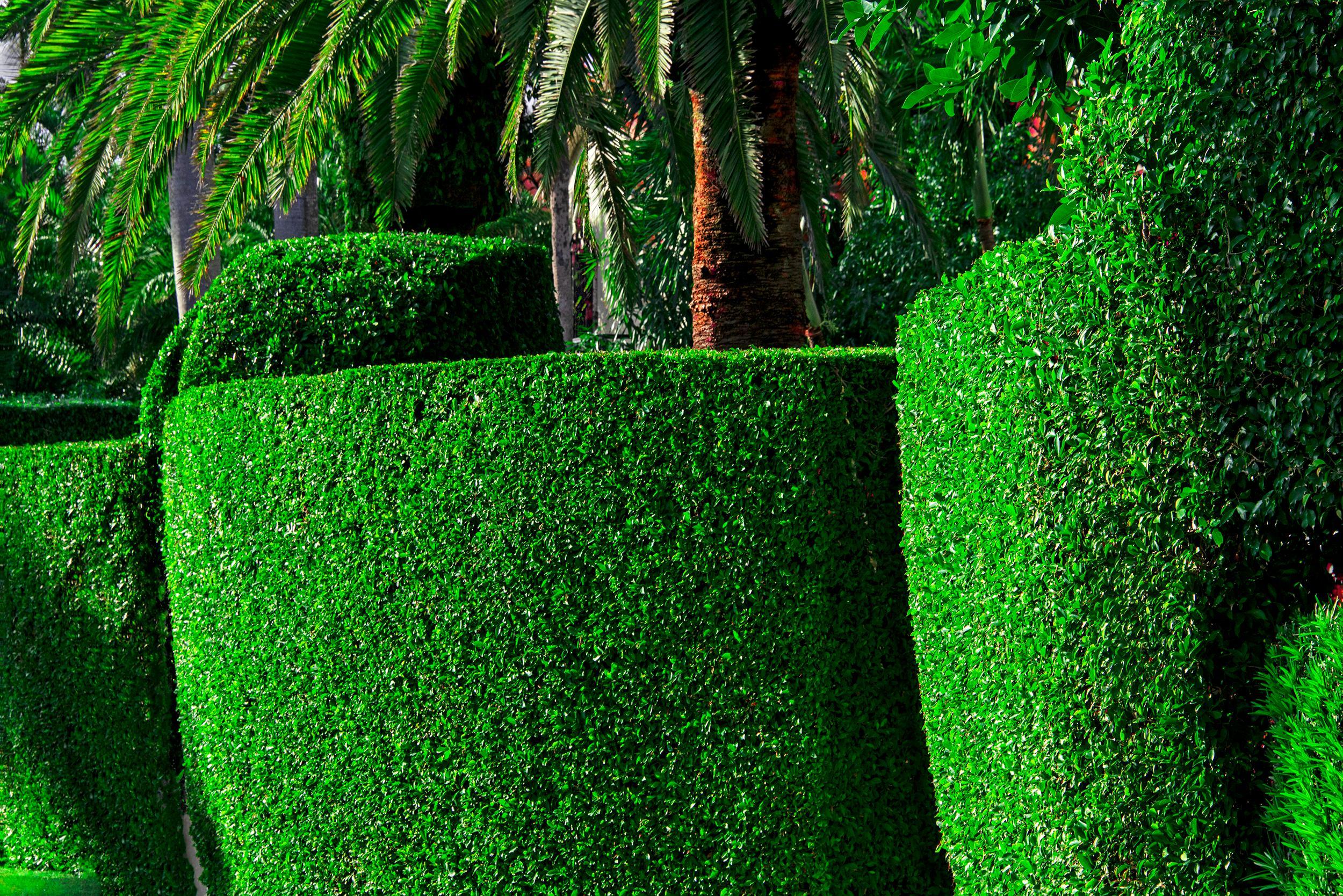 Hedge Fun - El Bravo Way,  Palm Beach  -  Slim Arrons forgot the Shrubs