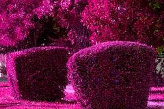 Hedge Fun - Flamingo Park Miami Beach - Violet Purple