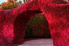 Hedge Fun - Palm Beach Arch - Slim Arrons forgot to Shoot the Shrubs