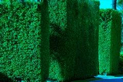 Hedge Fun - Sunset Island2