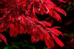 Jubilation Tree in Reds