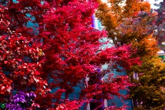 Jubilation Trees: San Francisco Victorian