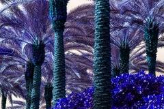 Palm Trees Turn Purple - Miami Beach