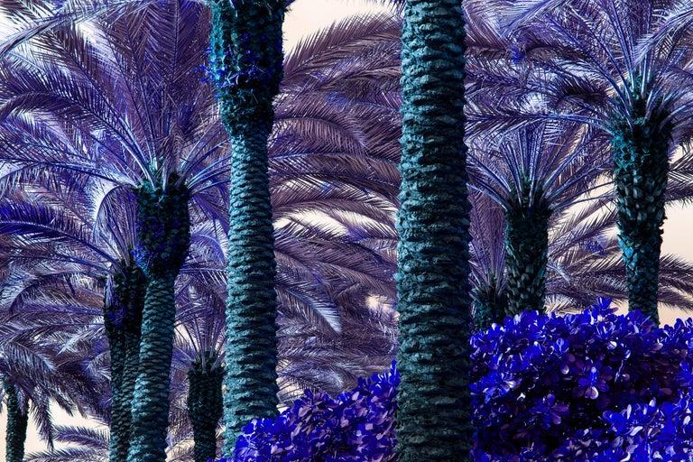 Robert Funk Color Photograph - Palm Trees Turn Purple - Miami Beach