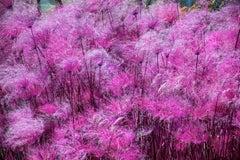 Pink Flowers Wispy Impressionist